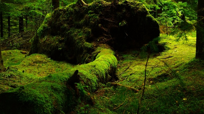 Wildnis im Siebengebirge