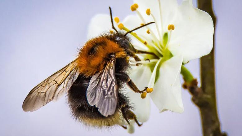 Insekten- und bienenfreundliches Königswinter